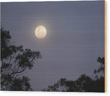 August Moon Wood Print by Evelyn Tambour