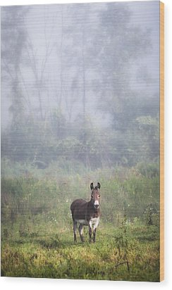August Morning - Donkey In The Field. Wood Print