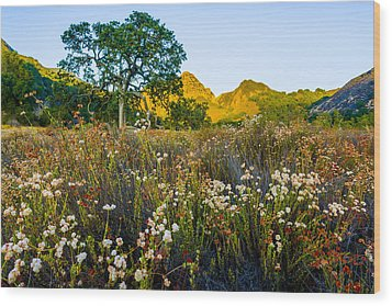 August Sunrise In Malibu Creek State Park Wood Print