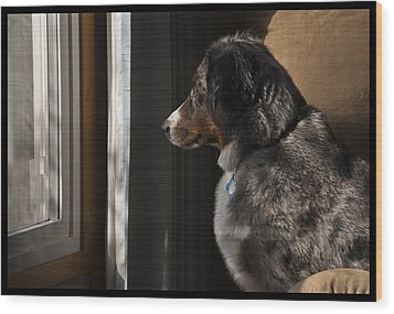 Aussie On Watch Wood Print by Ron Roberts