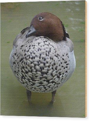 Australian Wood Duck Wood Print by Margaret Saheed