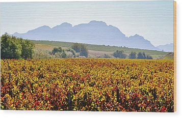 Autum Wine Field Wood Print by Werner Lehmann