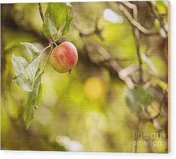 Autumn Apple Wood Print
