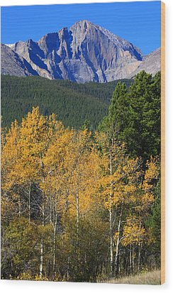 Autumn Aspens And Longs Peak Wood Print