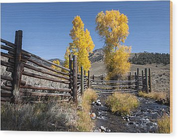 Wood Print featuring the photograph Autumn At The Lamar Buffalo Ranch by Jack Bell