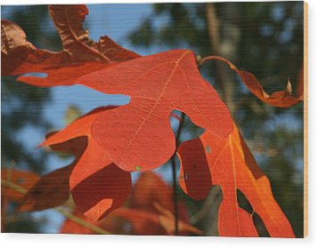 Autumn Attention Wood Print by Neal Eslinger