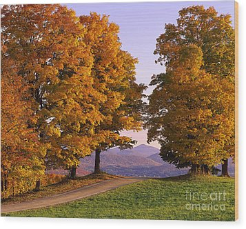 Autumn Backroad View Wood Print by Alan L Graham