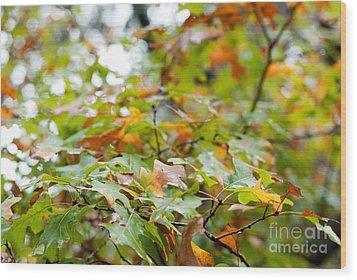 Autumn Wood Print by Barbara Shallue