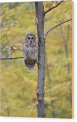 Autumn Barred Owl Wood Print