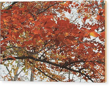 Wood Print featuring the photograph Autumn Beauty by Candice Trimble