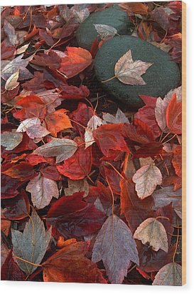 Wood Print featuring the photograph Autumn Broadcast by Gwyn Newcombe