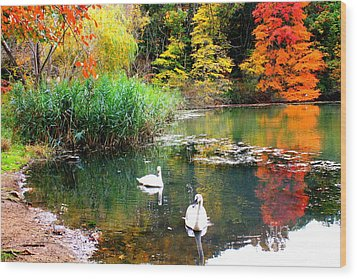 Autumn By The Swan Lake Wood Print by Dora Sofia Caputo Photographic Art and Design