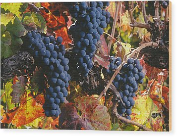 Autumn Cabernet Clusters  Wood Print by Craig Lovell
