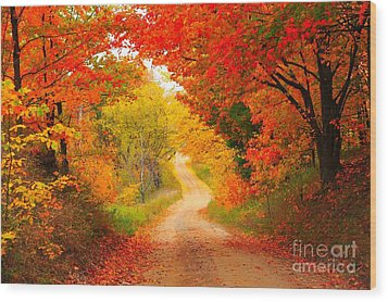 Wood Print featuring the photograph Autumn Cameo Road by Terri Gostola