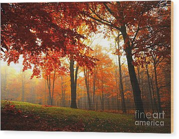 Autumn Canopy Wood Print by Terri Gostola