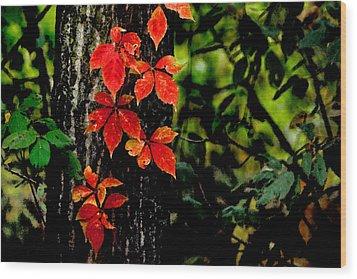 Autumn Climber Wood Print