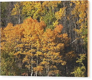 Autumn Color At The Continental Divide Wood Print by Kae Cheatham