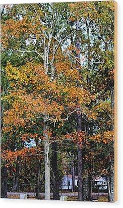 Autumn Colors Wood Print by Carolyn Ricks