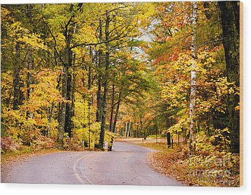 Autumn Colors - Colorful Fall Leaves Wisconsin - II Wood Print by David Perry Lawrence