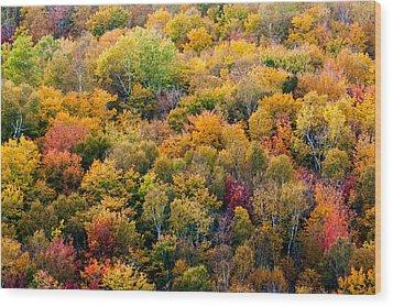Autumn Colors Wood Print by Matt Dobson