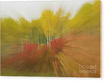 Autumn Colors Wood Print by Vivian Christopher