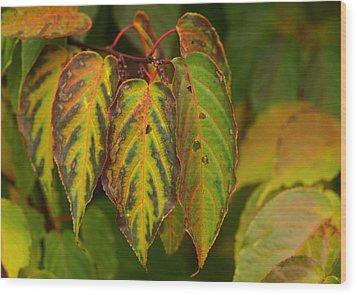 Autumn Colours Wood Print by Jacqui Collett