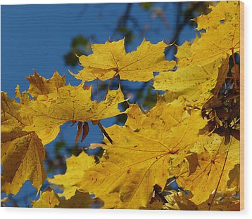 Wood Print featuring the photograph Autumn Colours by Janina  Suuronen