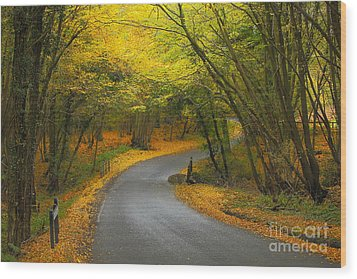Autumn Colours Wood Print by Stephen Dowdell