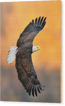 Autumn Eagle Wood Print