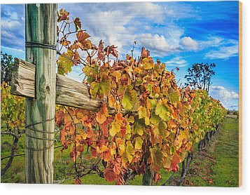 Autumn Falls At The Winery Wood Print by Peta Thames
