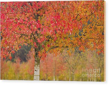 Autumn Fire Wood Print by Sonya Lang