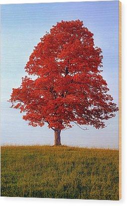 Autumn Flame Wood Print by Steve Harrington