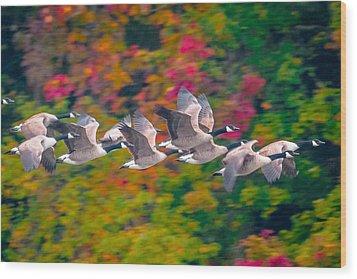 Autumn Flight Wood Print by Brian Stevens