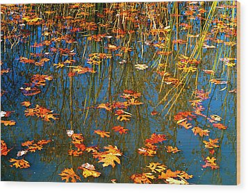 Wood Print featuring the photograph Autumn  Floating by Peggy Franz