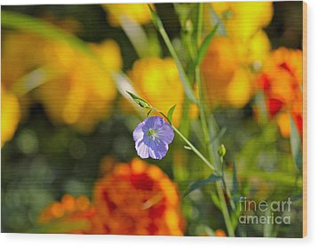 Wood Print featuring the photograph Autumn Flower by Jay Nodianos
