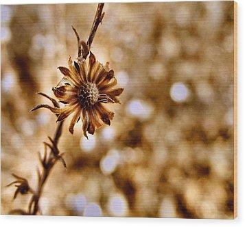 Autumn Flower Wood Print