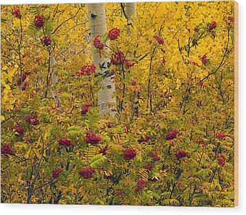 Autumn Forest Colors Wood Print by Leland D Howard