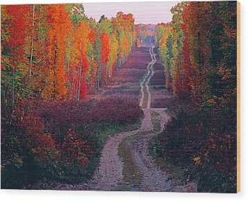 Autumn Forest Road Wood Print by Dennis Cox WorldViews