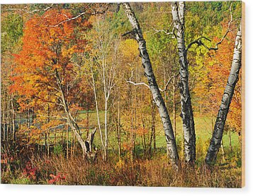 Autumn Forest Scene - Litchfield Hills Wood Print by Expressive Landscapes Fine Art Photography by Thom