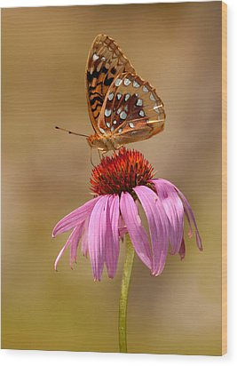 Autumn Fritillary Butterfly Wood Print