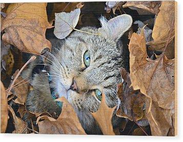 Autumn Fun Wood Print
