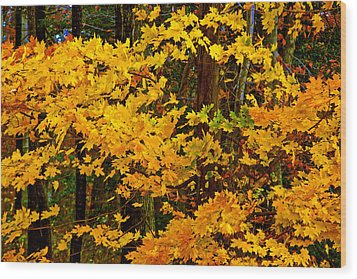 Autumn Glory Wood Print
