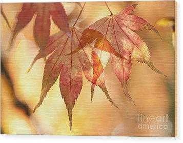 Autumn Glow Wood Print by Anne Gilbert