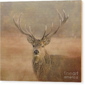 Magnificant Stag Wood Print