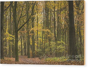 Autumn Gold Wood Print by Anne Gilbert