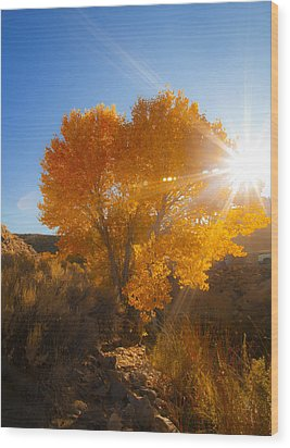 Autumn Golden Birch Tree In The Sun Fine Art Photograph Print Wood Print
