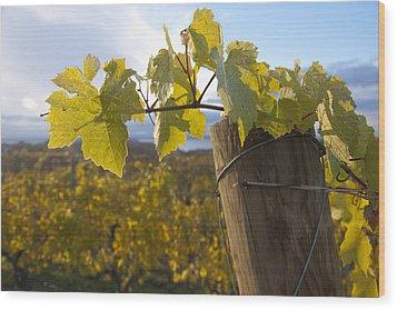 Autumn Grape Leaves Wood Print