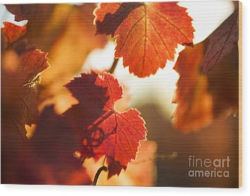 Autumn Grapevine Leaves Wood Print by Charmian Vistaunet