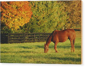Autumn Grazing Wood Print by James Kirkikis