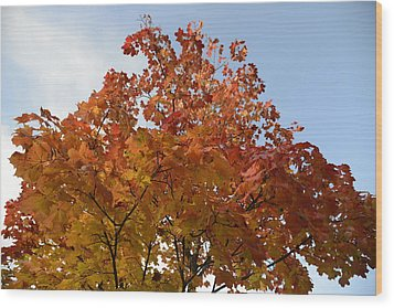 Autumn Harmony 1 Wood Print